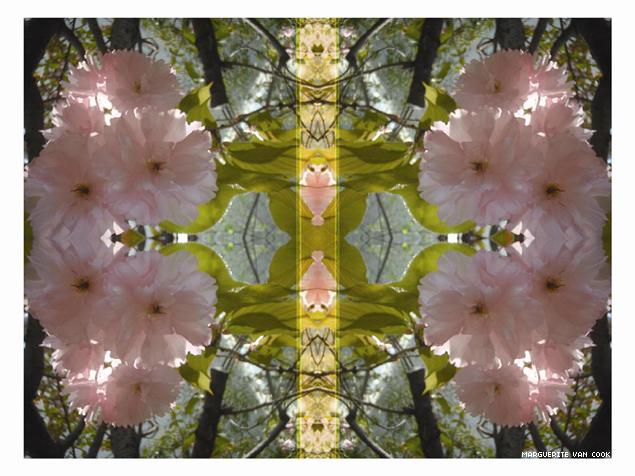blossomsmall